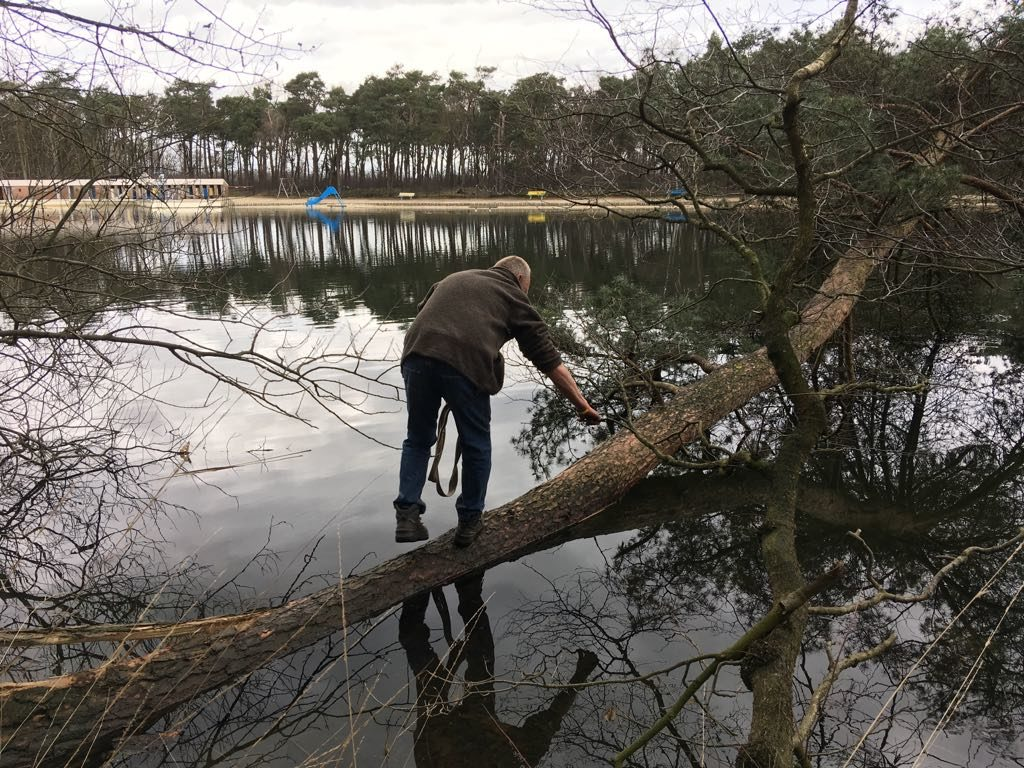 Die boom mag uit het water